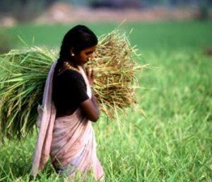 FAO_agricoltura